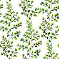 Watercolor maidenhair fern leaves seamless pattern. Hand painted fern ornament. Floral illustration isolated on white