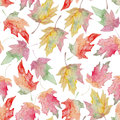 Watercolor maple autumn leaf seamless pattern Royalty Free Stock Photo