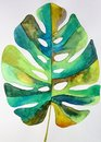Watercolor monstera leaf Royalty Free Stock Photo