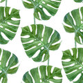 Watercolor monstera leaf seamless pattern Royalty Free Stock Photo