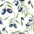 Watercolor olive branch background. Royalty Free Stock Photo