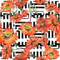 Watercolor orange gazania flowers. Floral botanical flower. Seamless background pattern. Royalty Free Stock Photo