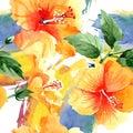 Watercolor orange naranja hibiscus flowers. Floral botanical flower. Seamless background pattern.