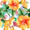 Watercolor orange naranja hibiscus flowers. Floral botanical flower. Seamless background pattern. Royalty Free Stock Photo