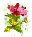 Watercolor paint - Hibiscus flower Stock Image