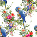 Watercolor painting with birds and flowers, seamless pattern on white background illustration Royalty Free Stock Photo