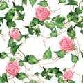 Watercolor painting botanical green leaves ivy with pink flowers seamless pattern on white background.Watercolor illustration trop Royalty Free Stock Photo