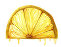 Watercolor painting fruit lemon slice on white background
