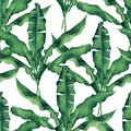 Watercolor painting green,banana leaves seamless pattern on white background.Watercolor hand paint .illustration palm,banana leaf, Royalty Free Stock Photo