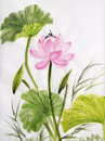Watercolor painting of lotus flower original art and dragonfly asian style Royalty Free Stock Photos