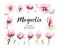 Watercolor Painting Magnolia blossom flower wallpaper decoration