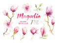 Watercolor Painting Magnolia blossom flower wallpaper decoration Royalty Free Stock Photo