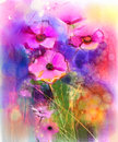 Watercolor painting pink cosmos flower