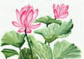 Watercolor painting of pink lotus flower original art asian style Stock Image