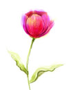 Watercolor Painting Pink, Red ...