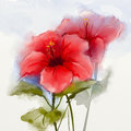 Watercolor Painting Red Hibisc...