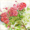 Watercolor painting of red roses and green leafs