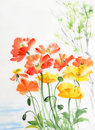 Watercolor painting of red and yellow poppies original style Stock Photography