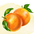 Watercolor painting on white background group of oranges Royalty Free Stock Images