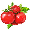 Watercolor painting on white background tasty tomatoes Stock Images