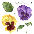 Watercolor pansy set. Hand painted floral illustration with leaves, viola flowers and branches isolated on white