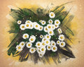 Watercolor pattern of a chamomile