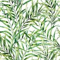 Watercolor pattern with magnificent palm tree leaves. Hand painted exotic greenery branch. Botanical illustration. For