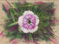 Watercolor pattern of a turkish carnation