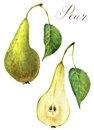Watercolor pear set. Sweet green fruit food illustration isolated on white background. For design, prints or background
