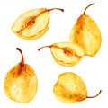 Watercolor pear, whole and half illustration isolated on white backdrop, Hand drawn vector sketch, Vintage tropical