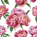 Watercolor peonies and leaves seamless pattern on white background. Floral texture for design, textile and background. Royalty Free Stock Photo
