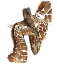 Watercolor picture animal mammals living in Africa giraffes, mother and child, female giraffe and cub, portrait o