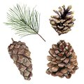 Watercolor pine cones set. Hand painted pine branch with cones isolated on white background. Botanical clip art for Royalty Free Stock Photo