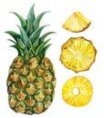 Watercolor pineapple set