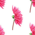 Watercolor pink Dahlia. Seamless pattern. Botanical art. Template for a business card, banner, poster, notebook