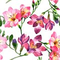 Watercolor pink freesia flower. Floral botanical flower. Seamless background pattern.