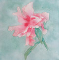 Watercolor pink and red peony at green background