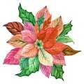 Watercolor poinsettia Hand painted winter Merry Christmas and H