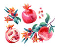 Watercolor pomegranate bloom branches and fruit set