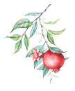 Watercolor pomegranate (garnet) branch