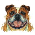 Watercolor printshop, print on the theme of the breed of dogs, mammals, animals, breed English bulldog, bulldog, portrait, color r
