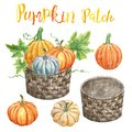 Watercolor pumpkins in a wicker orchard basket, isolated. Autumn harvest clipart, Thanksgiving day decor