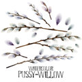 Watercolor pussy-willow set