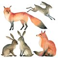 Watercolor realistic forest animal sketch. red fox, rabbit, hare