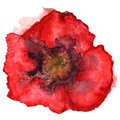 Watercolor red poppy flower sketch isolated vector Royalty Free Stock Photo