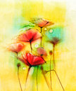 Watercolor red poppy flowers painting
