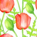 Watercolor red Poppy seamless pattern. Hand drawn botanical Papaver flower, poppy bud and leaf illustration isolated on white