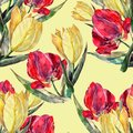 Watercolor red and yellow tulips. Floral seamless pattern on a cream background. Royalty Free Stock Photo