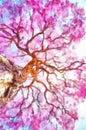 Watercolor Road Pantanal Matogrossense Pocone Mato Pink Lapacho Tree At Sun S Back Light Transpantaneira