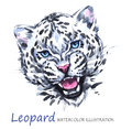 stock image of  Watercolor roaring leopard on the white background. African animal. Wildlife art illustration. Can be printed on T